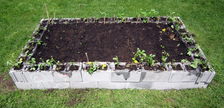 The edges of the garden are filled with strawberries. The upper left is the herb corner and the upper right corner has a squash plant.